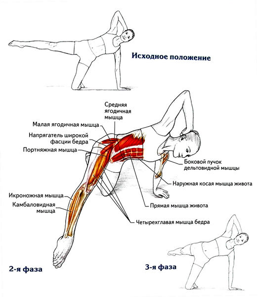 Мышца подвздошнопоясничная