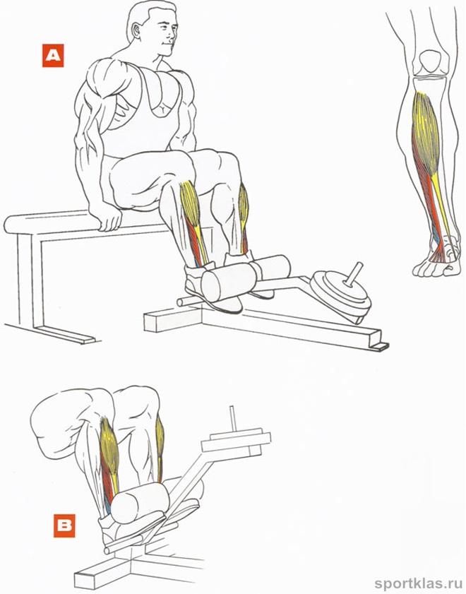 Сухожилий голеностопного сустава для этого поднимайте пятку ноги а носок фиксатор локтевого сустава купить